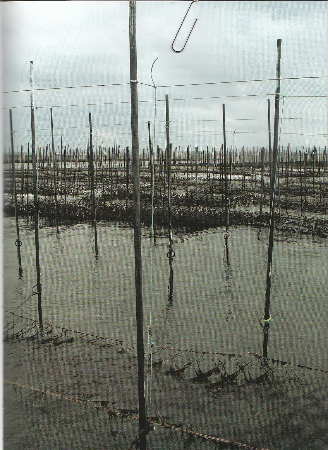 Tangfarm i Japan